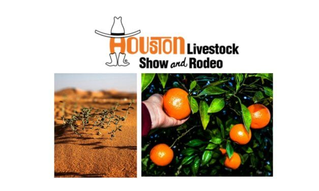 Houston Livestock Show and Rodeo Horticulture Photography Competition 2020
